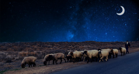 In de dag Schapen a shepherd grazing sheep at night under the new moon (crescent) in a desert at the roadside. Image depicting Ramadan concept.