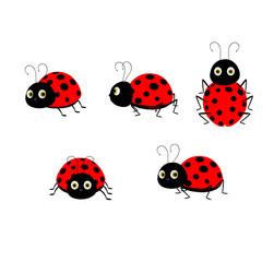 Five Ladybugs - Cartoon Vector Image