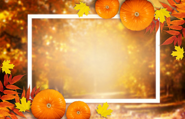 Thanksgiving day autumn festive card with pumpkins, fall autumnal leaves and white photo frame on background of blurred trees in park, empty place for your text