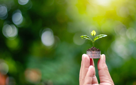 Planting small trees by hand on a blurred natural green background, money growth concept.