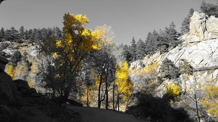 Colorado Rockies bei Boulder / Denver. Herbst / Fall / Indian Summer