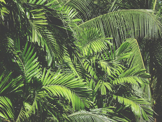 Wall Mural - green palm leaf