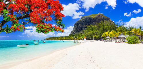 Photo sur Aluminium Ile Beautiful beaches of sunny Mauritius island. Tropical vacations