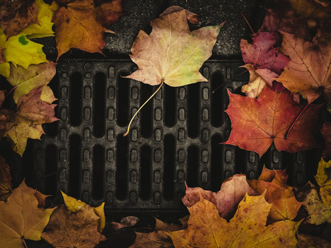 autumn background of fallen yellow leaves on the background of the gutter, a place for the inscription