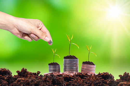 Hand growing seed coins money plant on with a blurred green background