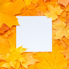 Square nature frame. Layout made of yellow leaves with empty blank paper card note. Copy space, Flat lay.