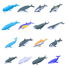 Whale icons set. Isometric set of whale vector icons for web design isolated on white background