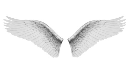 White wings isolated on white background, 3D rendering