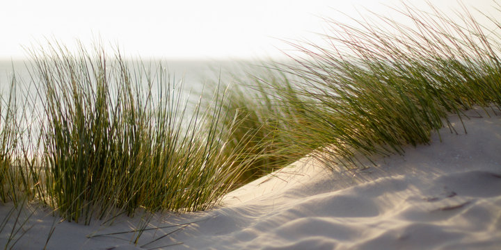 green grass on the beach with shallow depth of field and sea in the background