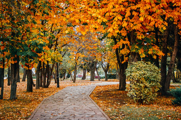 Autumn scenery with road, gold foliage