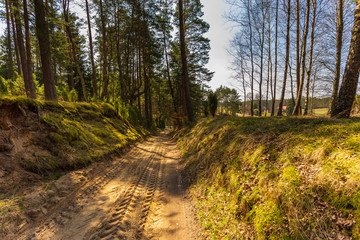 Glade road in the middle of the forest, Pomerania, Poland.