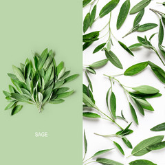 Fresh sage leaves layout.