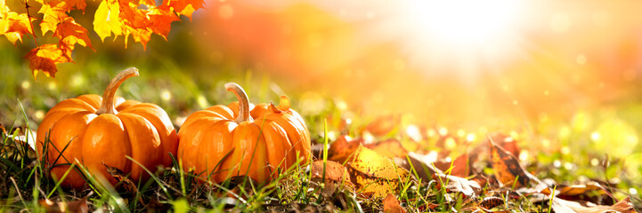 Aluminium Prints Autumn Banner Of Two Mini Pumpkins And Leaves In Grass At Sunset - Thanksgiving/Autumn