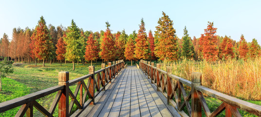 Wall Murals Honey Wood road and beautiful colorful forest landscape in autumn