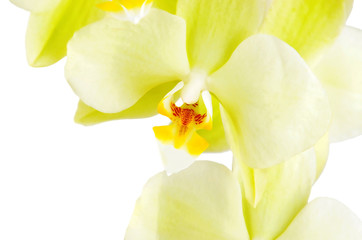 Deurstickers Orchidee Yellow orchid flower