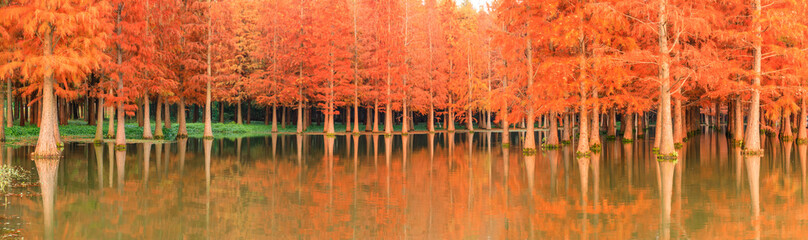 Spoed Fotobehang Oranje eclat Beautiful colorful forest landscape in autumn season