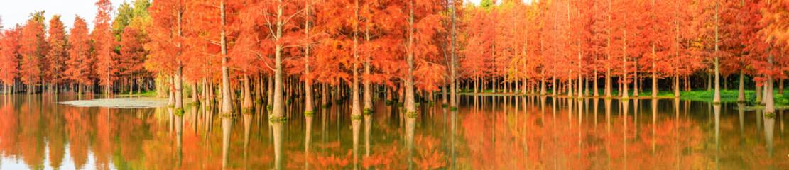 Foto op Aluminium Koraal Beautiful colorful forest landscape in autumn season