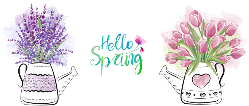 Beautiful watering can with lavender and tulips flowers. Hello spring hand drawn watercolor illustration