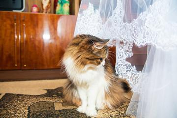 Wedding cat near beautiful bridesmaid dresses