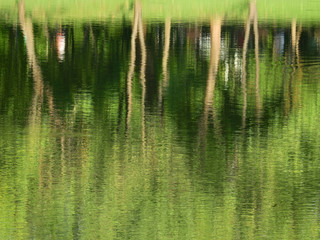 Wall Mural - abstract reflection of spring tree on water in the pond