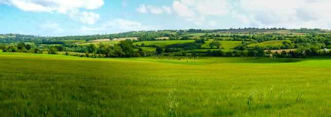 Scenic panoramic view of rolling countryside green farm fields with sheep, cow  and green grass in...
