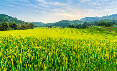 Foto auf Gartenposter Reisfelder Green and yellow color terraced rice field in north of Thailand