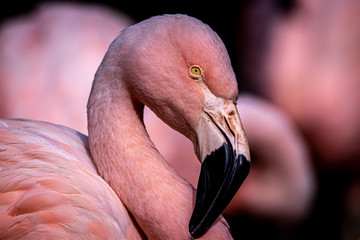 In de dag Flamingo Flamingo pink background