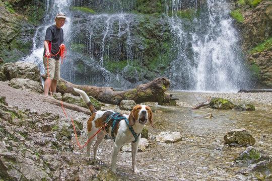 Beagle am Wasserfall