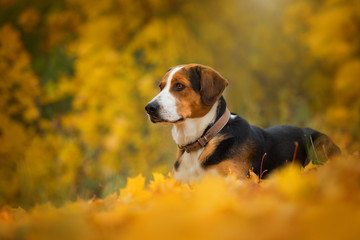 Mixed breed dog in autumn landscape