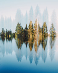Abstract picture of trees reflected in lake