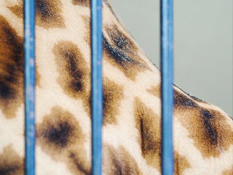 Close up of giraffe skin