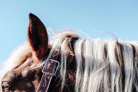 Close up of blonde mane on chestnut horse