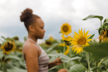 Selective focus of sunflower with woman standing nearby