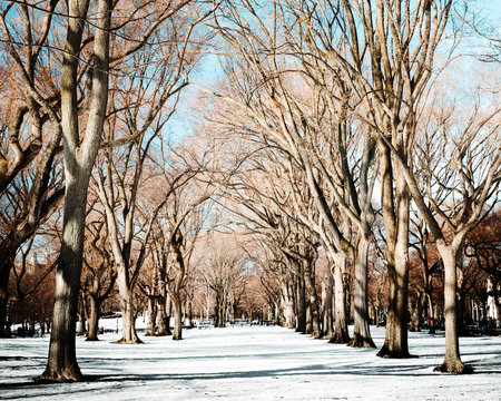 Scenic view of snowfall in Central Park, New York, USA