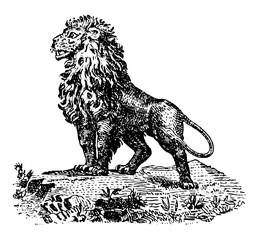 Cartoon Lion vintage illustration