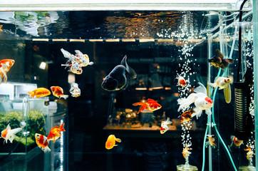 Close up colorful of fish in aquarium