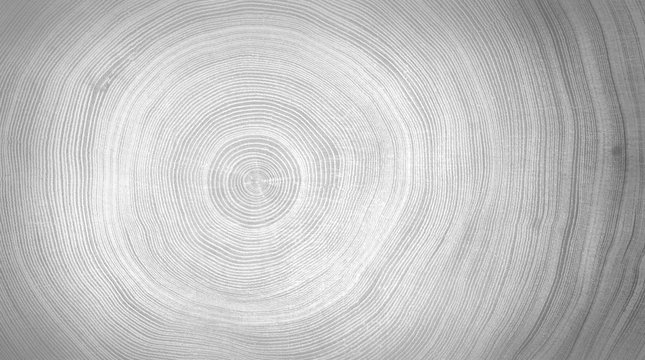Black and white cut wood texture. Detailed black and white texture of a felled tree trunk or stump. Rough organic tree rings with close up of end grain.