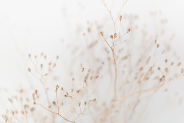 Wall Murals Macro photography Delicate Dry Grass Branch on White Background