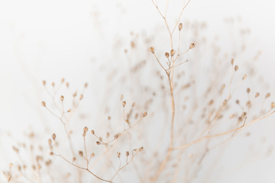 Delicate Dry Grass Branch on White Background