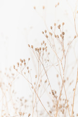 Printed roller blinds Macro photography Delicate Dry Grass Branch on White Background