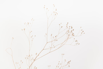 Poster Bloemen Delicate Dry Grass Branch on White Background