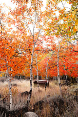 Shed in the Quaking Aspens