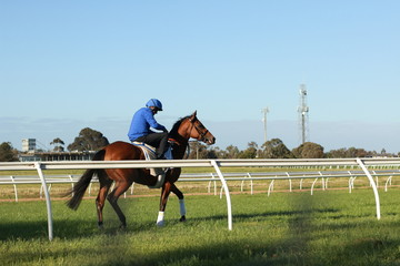thoroughbred racehorses training on a horse track in preperation for an international horse race on an early morning, Friday 18th of October 2019, Melbourne, Victoria