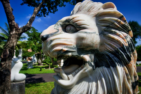 Marble lion's teeth - Vietnam fall of 2019