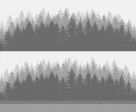 Coniferous pine forest with fir trees. Transparent plant shadow effect.