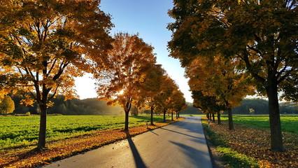 Fototapete - Allee im Herbst