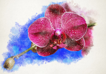 blooming purple orchid on a white background