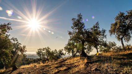 Amanecer en la Sierra de Adamúz, Andalucia