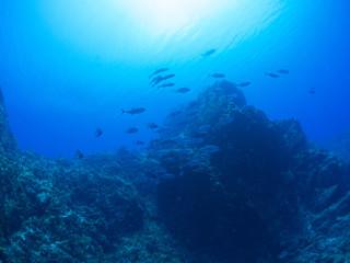 Photo sur Aluminium Recifs coralliens トカラ列島_口之島_スキューバダイビング