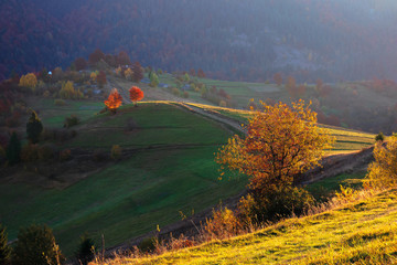 rural landscape at sunrise. beautiful autumn scenery in mountains. trees in fall foliage on rolling hills in dappled light. path  through grassy slope. hazy atmosphere